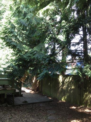 TreeTrim3