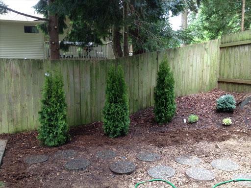 backyard_planted