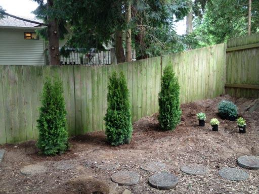 SaturdayYard_TreesPlanted