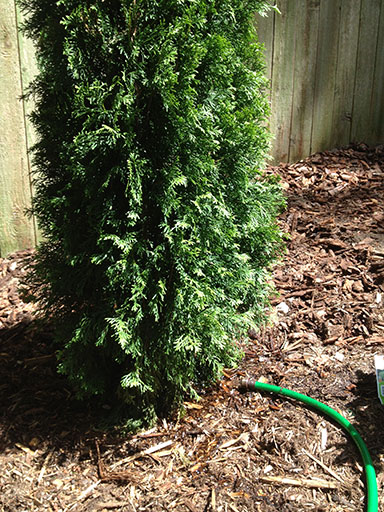 diy landscaping: watering is so easy, even a hose can do it