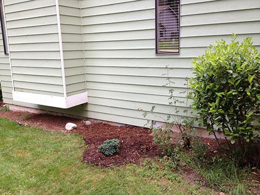 side_shrub