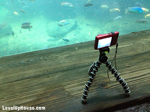joby_gorillapod_video_fish