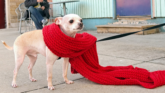 Level Up House: 50 ways to keep warm in your freezing cold house! Tip #2: BUNDLE UP!